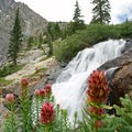 Wildflowers and White Falls.- McCullough Gulch Trail