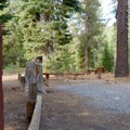 A typical site at Goose Meadows Campground.- Goose Meadows Campground