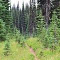 Killen Creek Trail.- Mount Adams: High Camp via Killen Creek