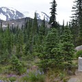 At the PCT take a short, slight right to High Camp Trail.- Mount Adams: High Camp via Killen Creek