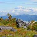 Mount Rainier (14,411').- Mount Adams: High Camp via Killen Creek