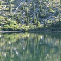 Trout rising at Obscurity Lake.- Mount Margaret Backcountry Lakes