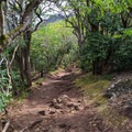 The trail begins with mild switchbacks.- Kuli'ou'ou Ridge