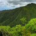 The lush landscape starts to become visible from the trail as it ascends more steeply.- Kuli'ou'ou Ridge