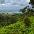 The trail becomes narrow as it straddles the ridge.- Kuli'ou'ou Ridge