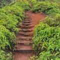 Stairs provided by the Sierra Club.- Kuli'ou'ou Ridge