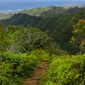 The trail becomes even steeper and more narrow toward the top.- Kuli'ou'ou Ridge