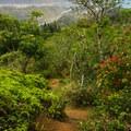 The steep trail.- Kuli'ou'ou Ridge