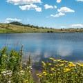 The wildflowers in full bloom.- North Crow Reservoir Loop