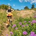 Wildflowers abound in July.- Lariat Trail + Stone Temple Circuit