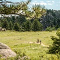 This park is an awesome place for mountain biking.- Lariat Trail + Stone Temple Circuit