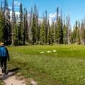 Beautiful meadows.- Twin Lakes Hike via Sheep Lake Trail