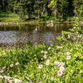 There are many small ponds and lakes along the trail.- Twin Lakes Hike via Sheep Lake Trail