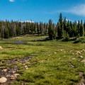 The melting snow creates very wet meadows.- Twin Lakes Hike via Sheep Lake Trail