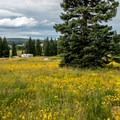 Dumont Lake Campground is set in fields of wildflowers.- Dumont Lake Campground