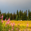 Fireweed in the foreground.- Dumont Lake Campground