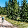 The trail follows an old jeep track for a gradual ascent.- Rabbit Ears Peak
