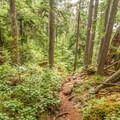 The trail goes through some beautiful forests along the way.- Sea to Summit Hike