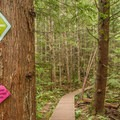 Frequent trail markers make the trail easy to follow.- Sea to Summit Hike