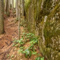 The trail winds in a narrow gap between boulders.- Sea to Summit Hike