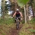 Flowy trail through pines.- Bennie Creek