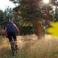 Meadow dives into pine.- Bennie Creek