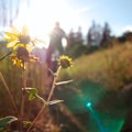 Wildflowers and views.- Bennie Creek