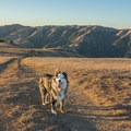 Dogs are allowed in Loma Alta Open Space.- Loma Alta