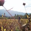 Wide open meadows.- Bennie Creek