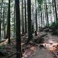 A gentle section of the trail that weaves through the forest.- Quarry Rock
