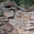 The beginning of the Sister's Trail, the most technical section of the loop.- Evergreen Mountain Loop