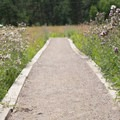 Some of the green trails on the route have raised trail beds running through meadows that are filled with wildflowers in the spring and summer.- Evergreen Mountain Loop