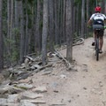 Climb to the Summit Loop section of the trail.- Evergreen Mountain Loop
