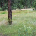 Wildlife can be seen here frequently.- Evergreen Mountain Loop