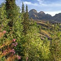 Fireweed in the foreground with Dromedary Peak (11,433') in the distance.- Lake Blanche Trail
