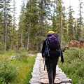The Fancy Pass Trail leading through the forest.- Fancy Pass, Missouri Lakes Loop