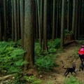 All the trails are dog friendly.-  Mount Fromme Trails: Lower Fromme Bike Loop