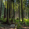 Winding through the woods on Floppy Bunny.-  Mount Fromme Trails: Lower Fromme Bike Loop