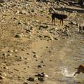 The dog beach.- Sunset Beach + English Bay