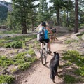 Dogs are welcome on the trail.- Little Scraggy Mountain Bike Ride