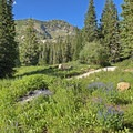 Looking toward Catherine's Pass and Wolverine Peak (10,795').- Albion Basin Campground