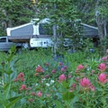 Pop-up camper with a sea of wildflowers.- Albion Basin Campground