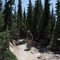 Heading through some small trees before the trail descends.- Bumpass Hell