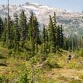Subalpine meadows.- Ring Lake Trail
