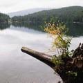 A quiet spot just around the corner from White Pine Beach. - Sasamat Lake