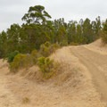 Follow the trail to the left into the eucalyptus.- Carquinez Overlook Loop