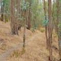 The Carquinez Overlook Loop Trail.- Carquinez Overlook Loop