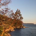 The arbutus trees glow in the fading light of the day.- Lighthouse Park