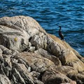 Lots of sea birds and sea lions.- Lighthouse Park