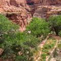 Moonflower Canyon's splendid sandstone and proud cottonwood trees.- Moonflower Petroglyphs